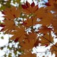 穂別の紅葉