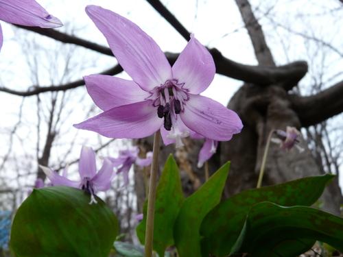 浦臼神社の春2
