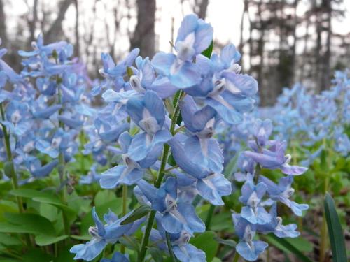 浦臼神社の春4