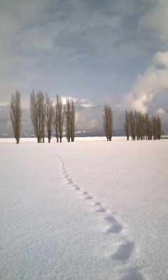 散歩道 4