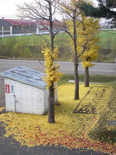 浦臼中学校前庭 5